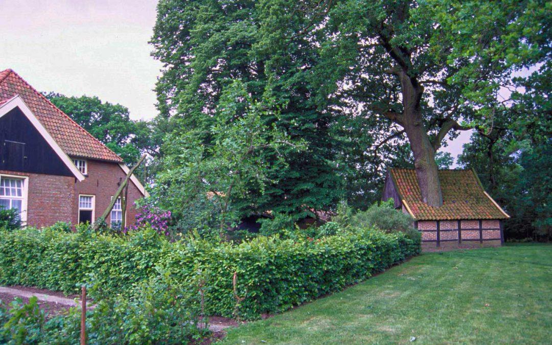Stem voor de mooiste boom van Nederland!